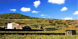 Alla scoperta della Sicilia del vino: tre itinerari nell'ant
